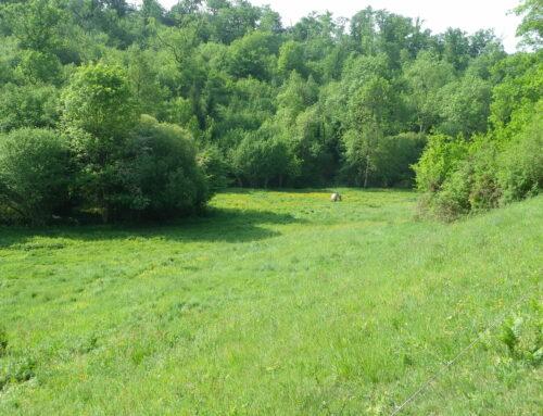 Concours de nouvelles – Une réserve près de chez vous, la vallée de la Renaudie (Charente)