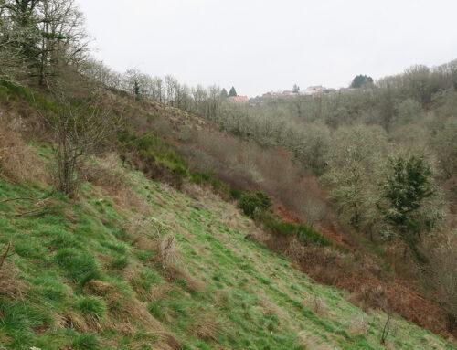 Dossier de consultation des entreprises travaux d'entretien d'espaces naturels sur le site de : lande du chemin de la Siauve – 23, Anzème