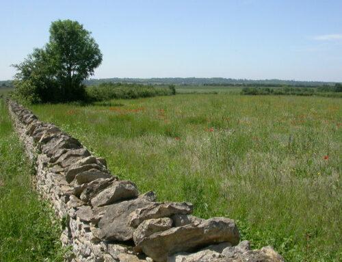 Appel d'offres – Diagnostic écologique, site de la Pierre-Levée (Bougon, 79)