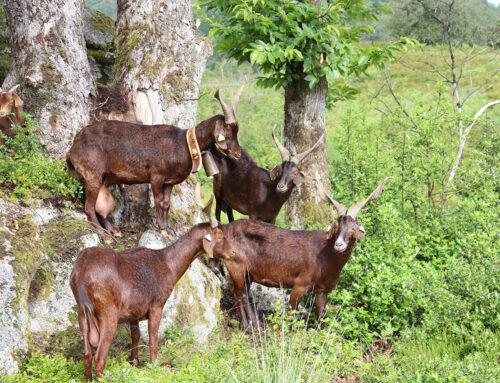Bilan d'activités 2020 sur la réserve naturelle de la Tourbière des Dauges (87)