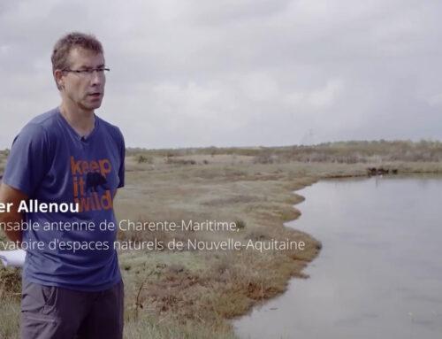 Le Marais de Seudre, Charente-Maritime (17)