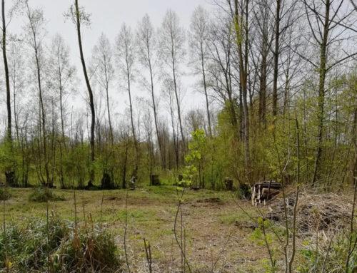 Travaux, marais de Saint-Hilaire la Palud (Deux-Sèvres)