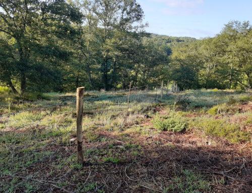 Restauration de la Lande des Places à Crozant (23) dans le cadre d'un contrat Natura 2000.