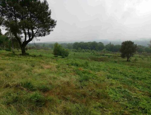 Travaux – landes de la Borderie (Charente)