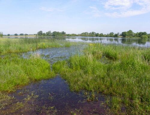 Restauration de la digue de l'étang de Beaurepaire (79)