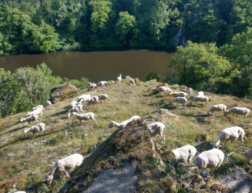 Restauration et entretien des landes de la Vallée de la Creuse (23)