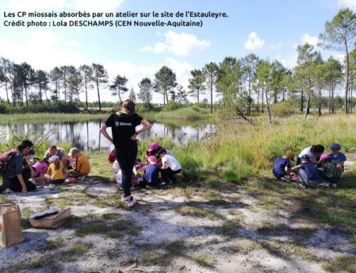 La libellule à l'honneur dans les écoles – Gironde (33)