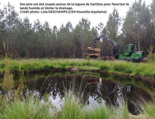 Lagunes d'Hourtin : les travaux de restaurations continuent ! (33)