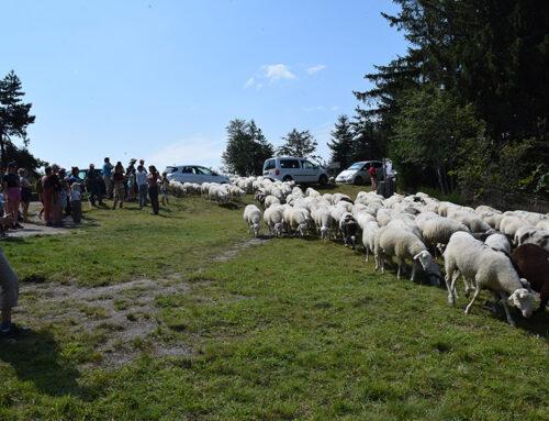 Animation autour du pâturage ovin sur la tourbière du Longeyroux (19)